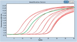 Amplification Curve from meat testing results