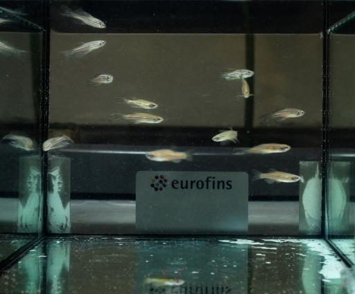 Eurofins_Biolab_CTP_Laboratories_Ecotossicologia
